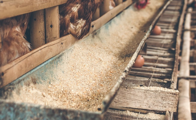 5 Mistakes To Avoid In Poultry Farming